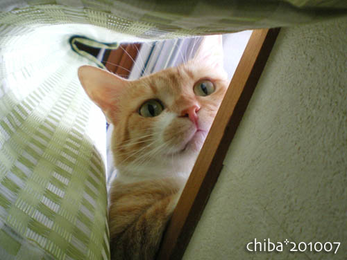 chiba10-07-67.jpg