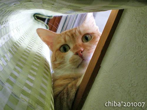 chiba10-07-68.jpg