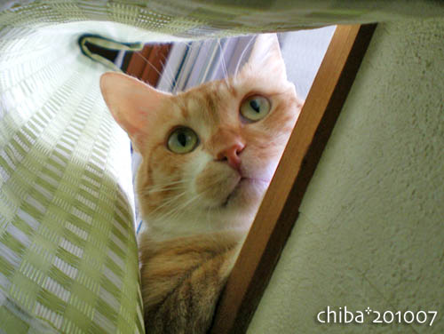 chiba10-07-69.jpg