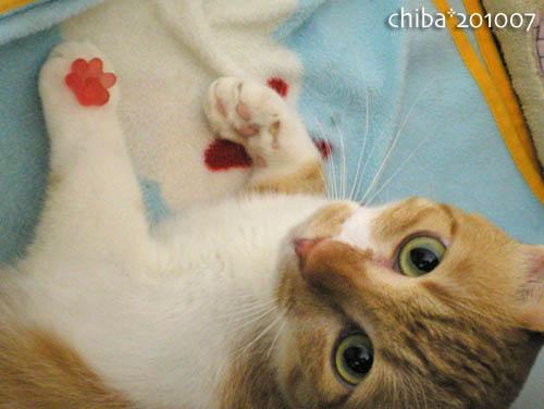 chiba10-07-83.jpg