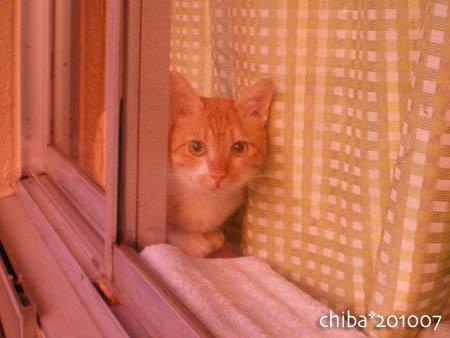 chiba10-07-91s.jpg
