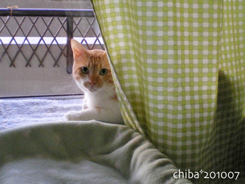 chiba10-07-97.jpg