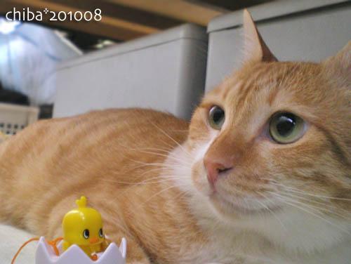 chiba10-08-75.jpg