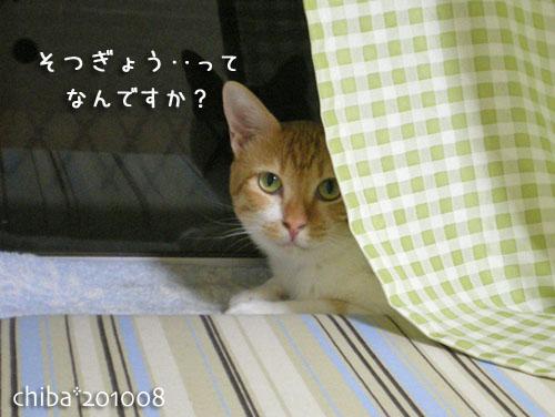 chiba10-09-01.jpg