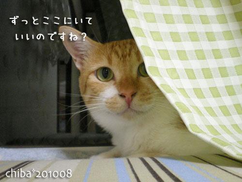 chiba10-09-04.jpg