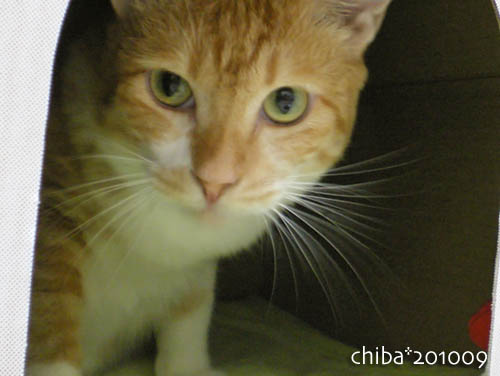 chiba10-09-102.jpg