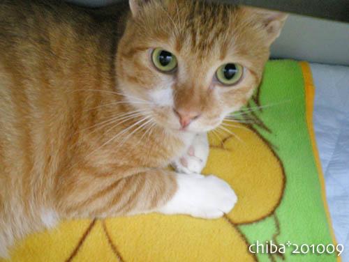 chiba10-09-105.jpg