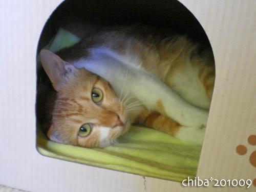 chiba10-09-119.jpg