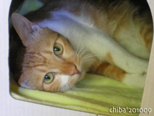 chiba10-09-120.jpg