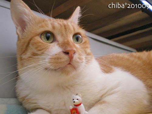 chiba10-09-125.jpg