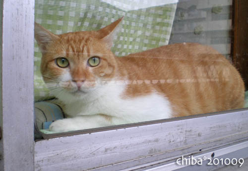 chiba10-09-130.jpg