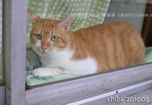 chiba10-09-131.jpg