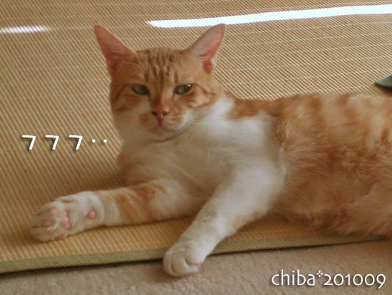 chiba10-09-15.jpg