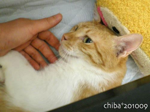 chiba10-09-22.jpg