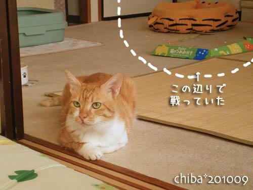 chiba10-09-23.jpg