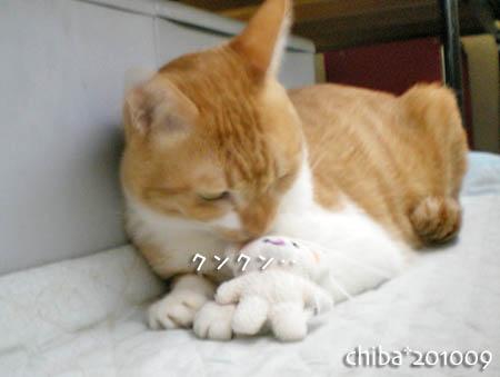 chiba10-09-33.jpg