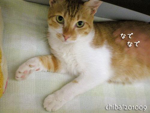 chiba10-09-44.jpg