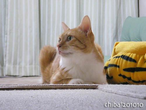 chiba10-10-09.jpg