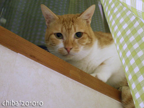 chiba10-10-110.jpg