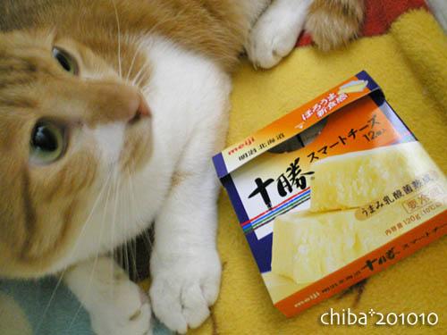 chiba10-10-15.jpg