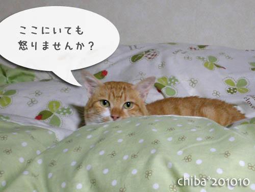 chiba10-10-153.jpg
