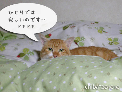 chiba10-10-153c.jpg