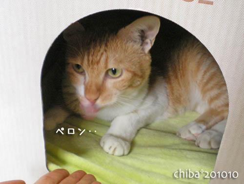 chiba10-10-20.jpg