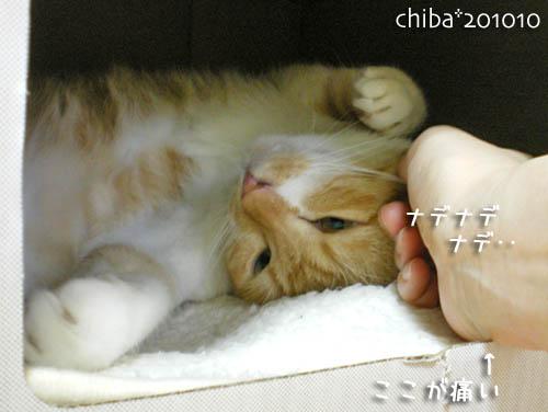 chiba10-10-54.jpg