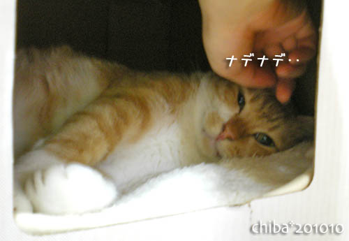 chiba10-10-59.jpg