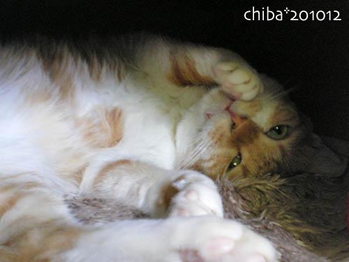 chiba10-12-101.jpg