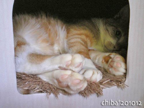 chiba10-12-112.jpg
