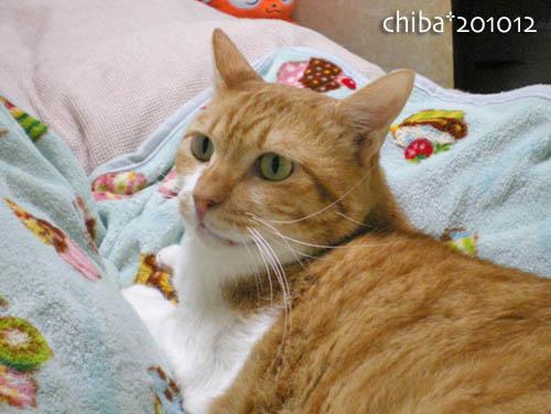 chiba10-12-145.jpg