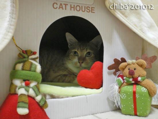 chiba10-12-43.jpg