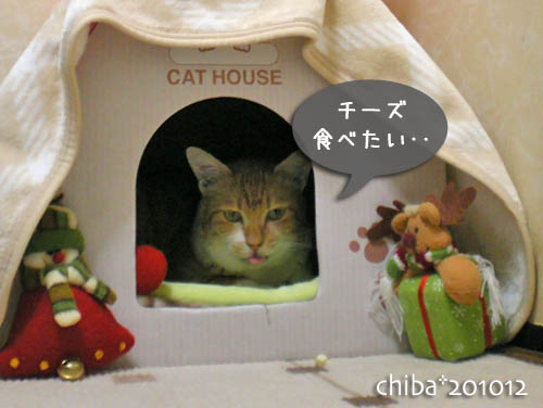 chiba10-12-51.jpg