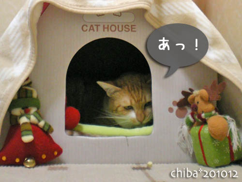 chiba10-12-52.jpg