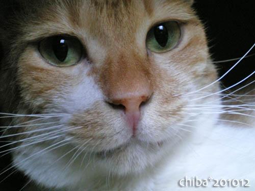 chiba10-12-71.jpg