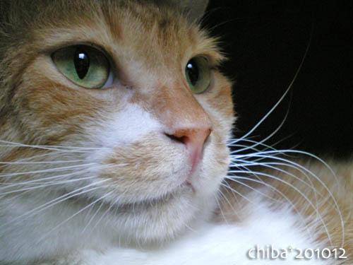 chiba10-12-72.jpg