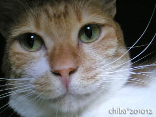 chiba10-12-73.jpg