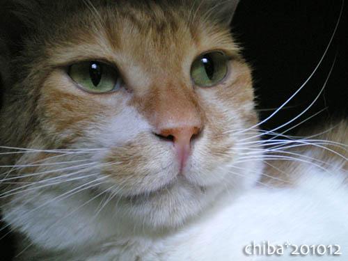 chiba10-12-75.jpg