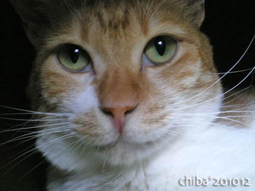 chiba10-12-76.jpg