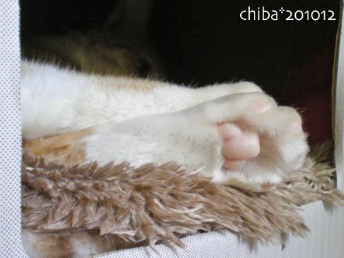 chiba10-12-86.jpg