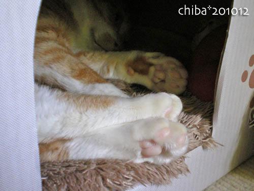 chiba10-12-87.jpg