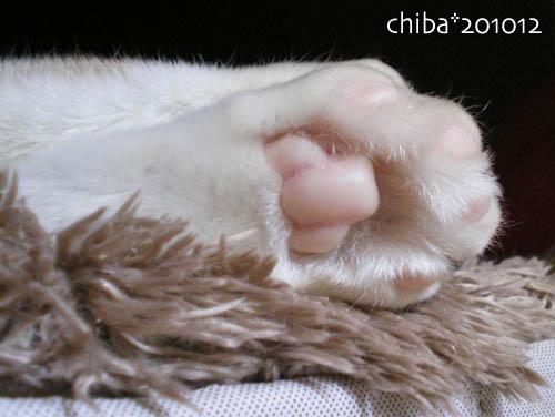 chiba10-12-90.jpg