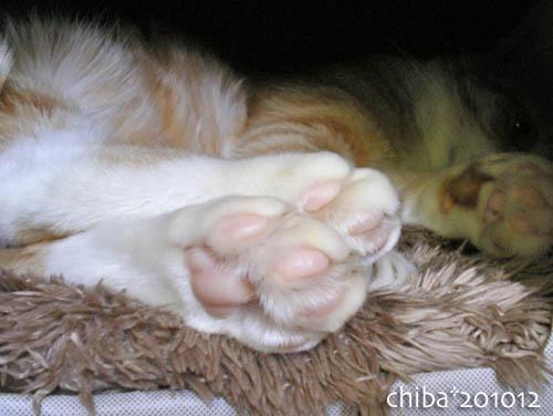 chiba10-12-92.jpg
