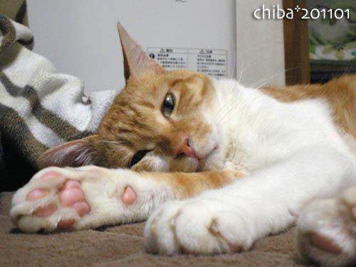 chiba11-1-113.jpg