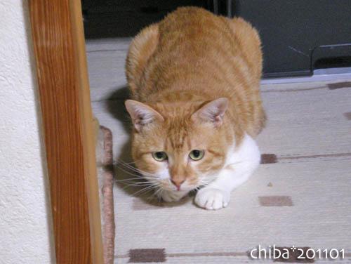 chiba11-1-116.jpg