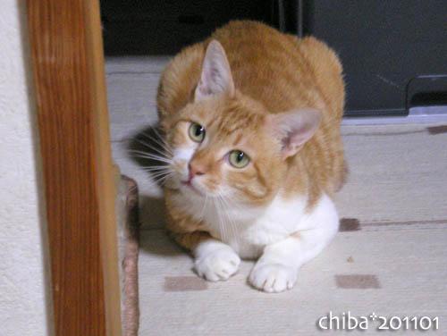 chiba11-1-118.jpg