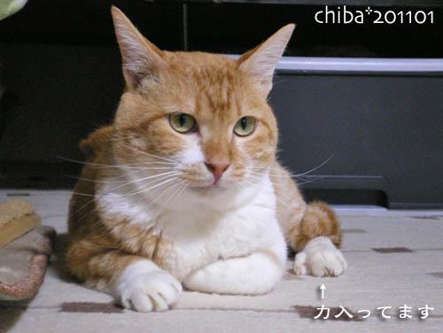 chiba11-1-121.jpg