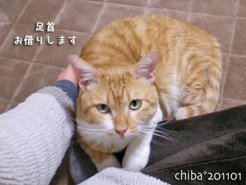 chiba11-1-130s.jpg