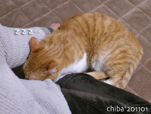 chiba11-1-131.jpg
